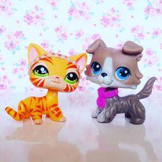 Littlest Pet Shop Gray Collie 67 short Hair Cat 1451 Colllar Tiara Accessories #Hasbro
