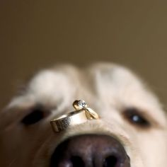 Wow! Try to keep the dog still.....but would make a great pic..2014-01-02-19dogwithweddingringsjeffcookephotography.jpg