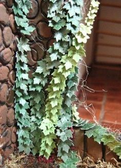how to: ivy .. Bonsai wood be pretty cool in the yard..