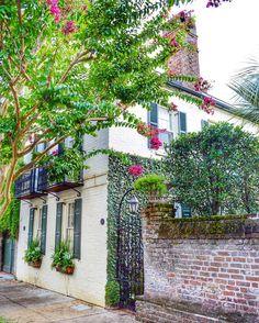 Thanks for sharing, mnswick! | Charleston, South Carolina
