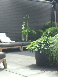 Home Decor outdoor No 40 Best Black Plants and Flowers to Add Drama and Make Awesome Black Garden No 40 Best Black Plants and Flowers to Add Drama and Make Awesome Black Garden Painted Brick Exteriors, Painted Brick Walls, Garden Design Ideas On A Budget, Small Garden Design, Modern Landscaping, Backyard Landscaping, Brick Wall Gardens, Garden Design Magazine, Patio Plans