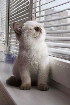 Love this #Baby Animals #cute baby Animals  http://cutebabyanimalsgallery.blogspot.com