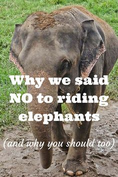 Thinking of riding an elephant in Southeast Asia? This article might make you think twice...