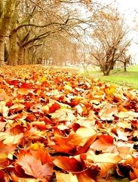 Free autumn Images, Pictures, and Royalty-Free Stock Photos Royalty Free Images, Royalty Free Stock Photos, Fall Photos, Pumpkin, Teen, Leaves, Autumn, Pictures, Outdoor