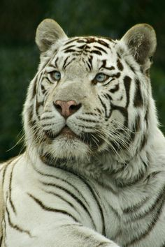 such a gorgeous animal