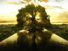 tree of life - Google Search