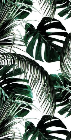Green leaves aesthetic wallpaper aesthetic wallpaper iphone aesthetic background aesthetic background iphone wallpaper # aesthetic # backgrounds – Background – Best of Wallpapers for Andriod and ios Leaves Wallpaper Iphone, Plant Wallpaper, Tropical Wallpaper, Green Wallpaper, Cute Wallpaper Backgrounds, Pretty Wallpapers, Vintage Backgrounds, Office Wallpaper, Wallpaper Ideas