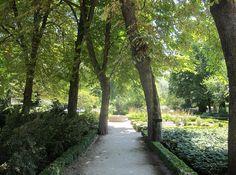 Jardin Botanico: un oasis en medio de Madrid