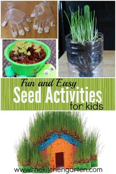 Want to show your kids how growing plants begin from seeds? Check out these simple seed activities for kids and get them growing! Seed Activities For Kids, Nature Activities, Summer Activities For Kids, Educational Activities, Learning Activities, Kids Learning, Plant Projects, Garden Projects, Projects For Kids