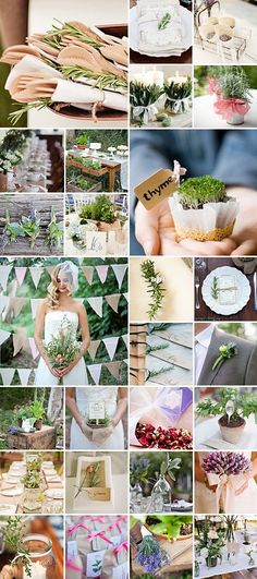 Weddings and Herbs: This lovely culinary wonder adds a natural and organic touch to the wedding day, and in some cases, even a splash of colour! Wedding Themes, Wedding Blog, Dream Wedding, Wedding Ideas, Themed Weddings, Wedding Stuff, Wedding Color Schemes, Wedding Colors, Wedding Centerpieces