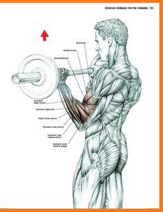 63 best Strength Training Anatomy images on Pinterest | Fitness ...