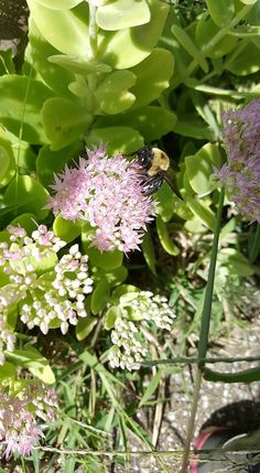 Perfect busy bee