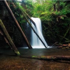 Gorgeous waterfall at Marriners Falls along the Great Ocean Road near Apollo Bay and Skenes Creek. Fabulous capture courtesy of @jarrod_hyde_bts #liveinvictoria #victoria #vic #marrinersfalls #falls #waterfalls #greatoceanroad #surfcoast #apollobay #skenescreek #water #forest #nature #ferns #beautiful #scenic #love #australia #liveinaustralia by liveinvictoria