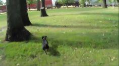 Odie's Squirrel Hunt