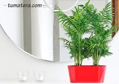 Encuentralas en: http://www.tumatera.co/products/mpa-301413-jardinera-porto/
