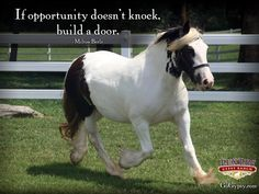 Jennifer of LexLin is a 14.1h 2008 black and white tobiano mare with great conformation and a wonderful personality.