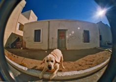 Devil Dog. Kos, Greece.  © Chris Trew / Plastic Cameras 2012