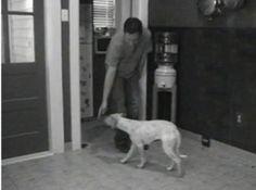 Hazel practicing her hand targeting.  http://www.catchdogtrainers.com/