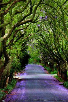 Jacaranda Road