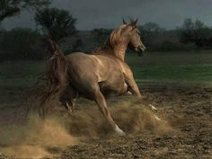I love the beauty of a horse running!