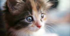 Un acte d'une rare cruauté a ébranlé la Dordogne dans la nuit du 24 au 25 septembre: trois jeunes ont passé leurs nerfs sur un chat âgé de seulement quelques mois…