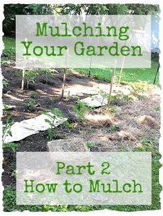 Mulching Garden Part great additional info, mentions black walnut, but cant forget about tree-of-heaven Garden Mulch, Garden Plants, Garden Landscaping, Unique Gardens, Beautiful Gardens, Fruit Garden, Vegetable Garden, Farm Gardens, Outdoor Gardens