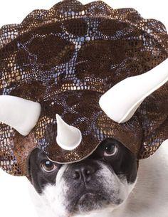 La minute chaton du jour : des chiens déguisés en dinosaures