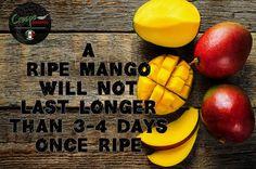 mango on a dark wood background. Dark Wood Background, The Selection, Mango, Organic, Fruit, Storage, Food, Manga, Purse Storage
