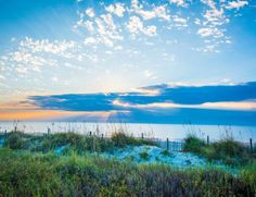 Find the best Myrtle Beach hotel deals and vacation packages for your summer trip to the Myrtle Beach area, including savings condos, beach home rentals and resorts in North Myrtle Beach, Surfside Beach, Garden City Beach and Pawleys Island. Myrtle Beach Attractions, Myrtle Beach Hotels, Myrtle Beach Vacation, Myrtle Beach Sc, Spring Vacation, Beach Trip, Beach Bbq, City Beach, Carolina Beach