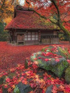 Nara Park Japan Photo by . magical Nara Park Japan Photo by . Beautiful Places, Beautiful Pictures, Wonderful Places, Japan Garden, Cabin In The Woods, Autumn Scenes, Japan Photo, Japan Picture, Nara