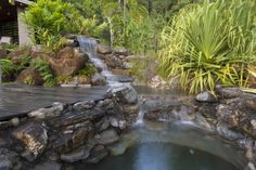 EcoSplash: Natural Swimming Pools by EcoSplash