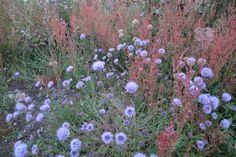 Anglesey coastal flora. Anglesey, Coastal, Flora, Album, Plants, Planters, Plant, Planting