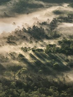 Dawn in the Trees by Appalachian Hiker http://flic.kr/p/Hzmb2h