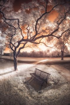 Parramatta Park - Infrared (without RGB swapping) 15mm [Fisheye], F/5.6, 1/250, ISO100 Canon 15mm f/2.8 Fisheye Shot with an infrared-converted Canon 5Dmk2 (715nm) Like infrared photos?...
