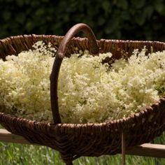 Wicker Baskets, Natural Remedies, Foodies, Backyard, Remedies, Syrup, Top, Patio, Backyards