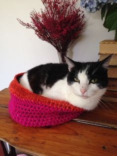 The answer to 'yeah, but what do you put in a crochet bowl?'…….. A cat of course!!