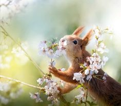 Unique Animals, Animals And Pets, Cute Animals, Squirrel Pictures, Animal Pictures, Beautiful Creatures, Animals Beautiful, Happy Squirrel, Emotional Support Animal