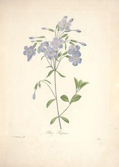 Choix des plus belles fleurs : - Biodiversity Heritage Library
