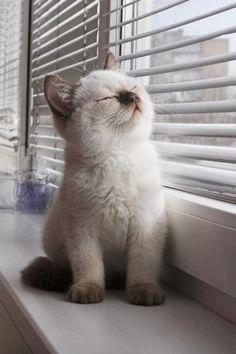 sunbathing....