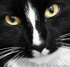 """* * GRAMMER KITTEH: """" It'z not's who ya know; it's 'whom' you know."""""""