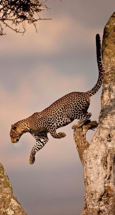 Photographed On An African Safari.