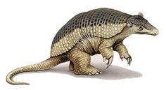 View Priodontes maximus (giant armadillo) on the Animal Diversity Web. Giant Anteater, Celtic Art, Armadillo, Prehistoric, Body Painting, Mammals, Turtle, Creatures, Image