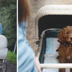 Megunták a sok kérdezősködést, kutyájukkal készítettek babás képeket