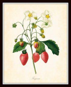 Vintage strawberry print.