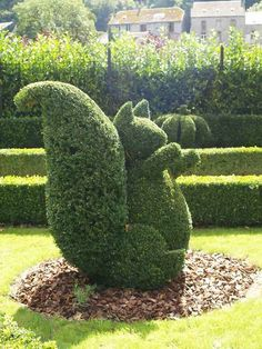 Squirrel Topiary at the Topiary Garden in Durbuy Belgium - photo from Durbuy.be : Squirrel Topiary at the Topiary Garden in Durbuy Belgium - photo from Durbuy. Topiary Garden, Garden Art, Garden Plants, Topiaries, Garden Kids, Garden Table, Garden Types, Formal Gardens, Outdoor Gardens