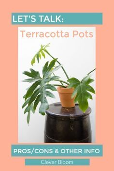 Learn all about terracotta pots including pros/cons and what plants can be housed in them - Clever Bloom Indoor Plants Clean Air, Indoor Plants Low Light, Indoor Plant Pots, Indoor Gardening, Container Gardening, Plants Are Friends, Garden Spaces, Terracotta Pots, Plant Care