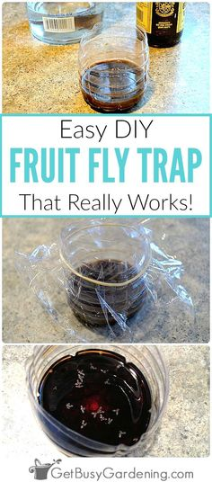 Simply using fruit, juice or vinegar in a fruit fly trap won't kill the fruit flies. Try this easy DIY fruit fly trap that will both trap AND kill them. fly trap Super Easy DIY Fruit Fly Trap (that really works! Gnat Traps, Fly Traps, Diy Gnat Trap, Indoor Gardening Supplies, Container Gardening, Gardening For Beginners, Gardening Tips, Best Fruit Fly Trap, Garden Pests