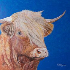 Highland Cow by Melissa Symons