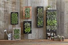Resultado de imagem para treliças de madeira para jardim vertical