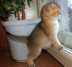 Where is the bird????